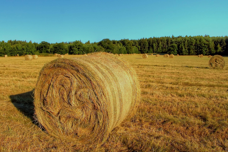 Ventajas y desventajas de la biomasa