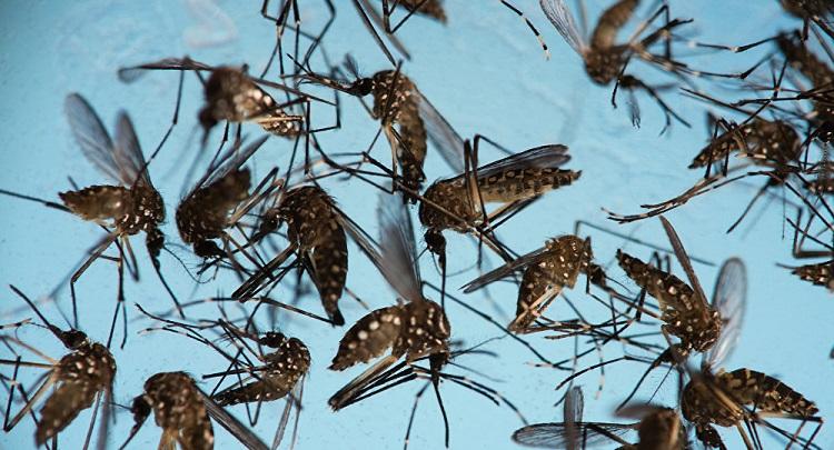 Plaga de mosquitos Zika