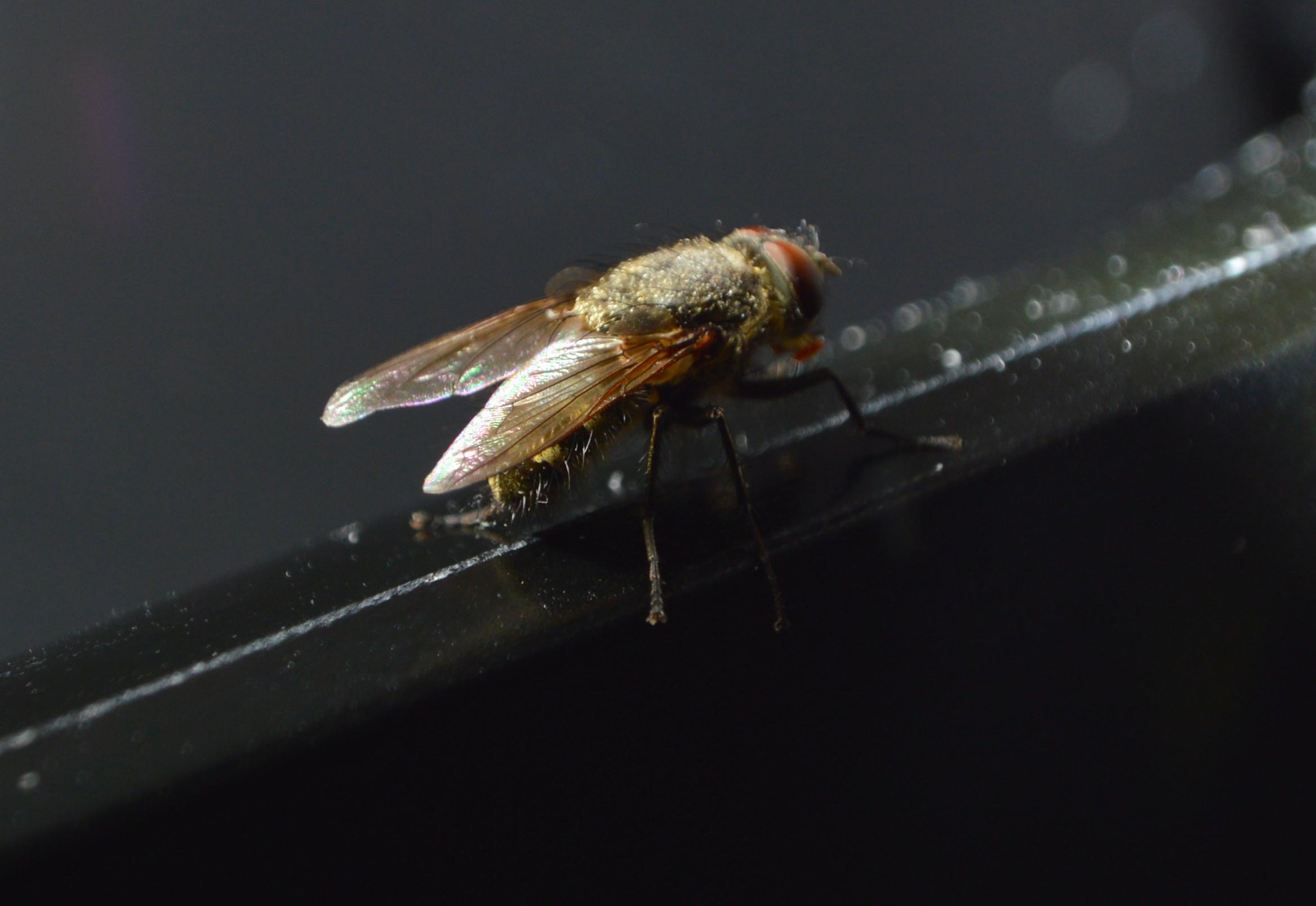 La fábrica de moscas